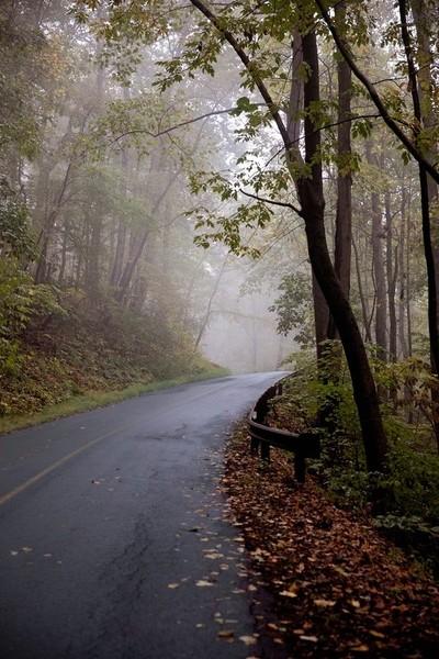 Carter Mt Fog-8414