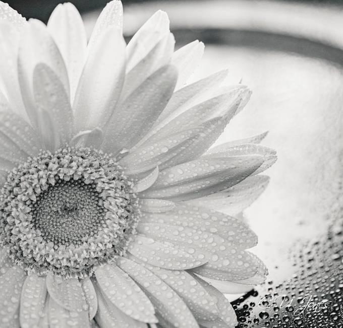 still life cut flowers