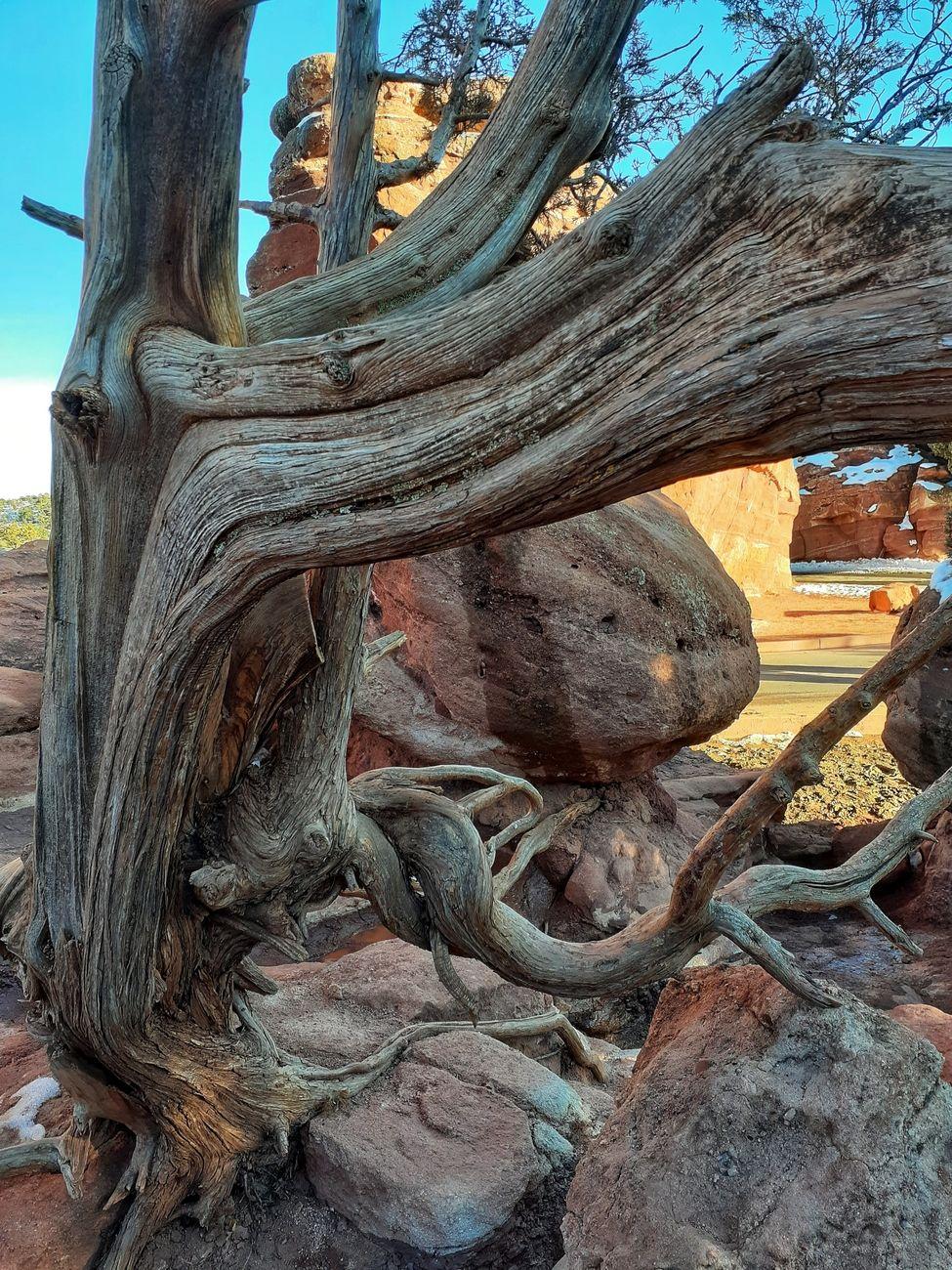 Taken at the Garden of the Gods in Colorado Springs, Colorado.