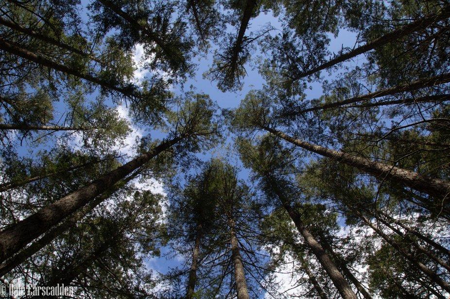 Trees-3329