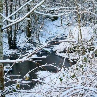 Winter At Salish Ponds