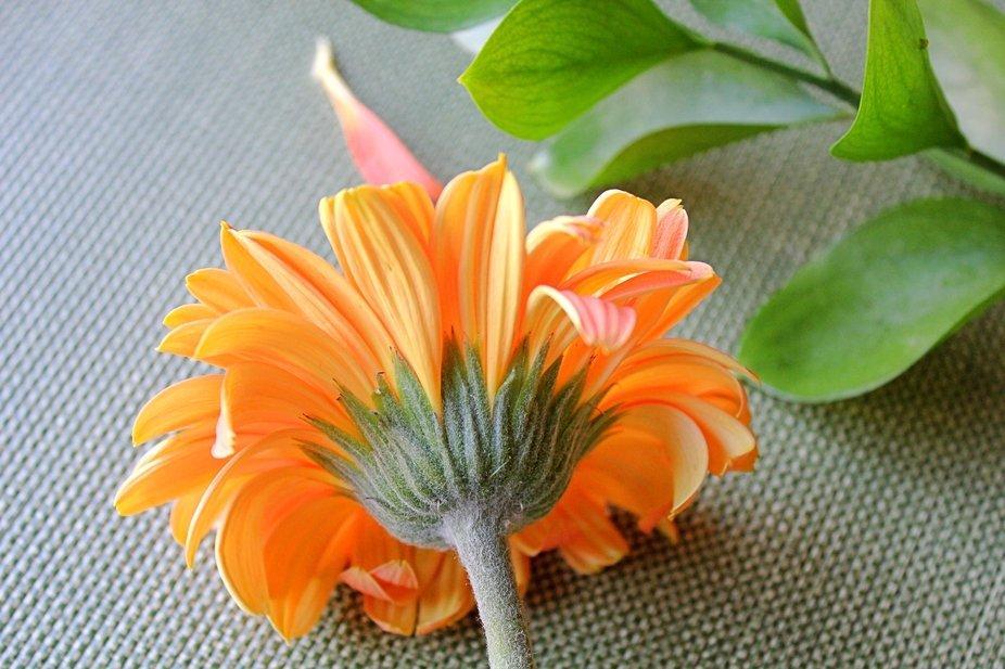 IMG_1261-spring flower