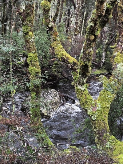 Creek rapids