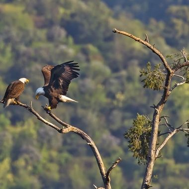 I wonder if they are arguing or discussing how to bring up their two children in the nest down below.