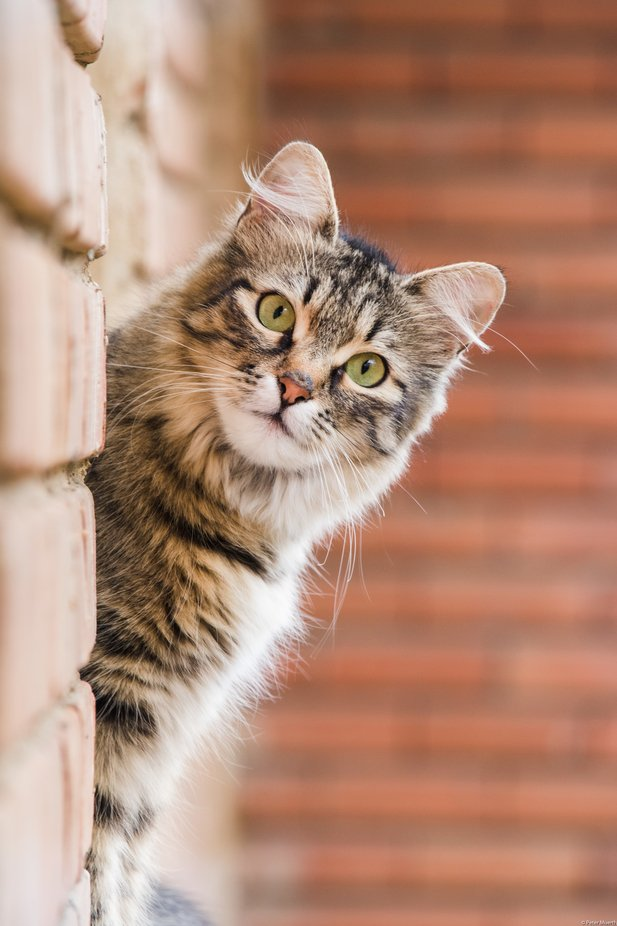 Hello by petermuerth_0566 - The Cutest Pets Photo Contest