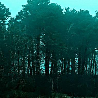 Turquoise Treement