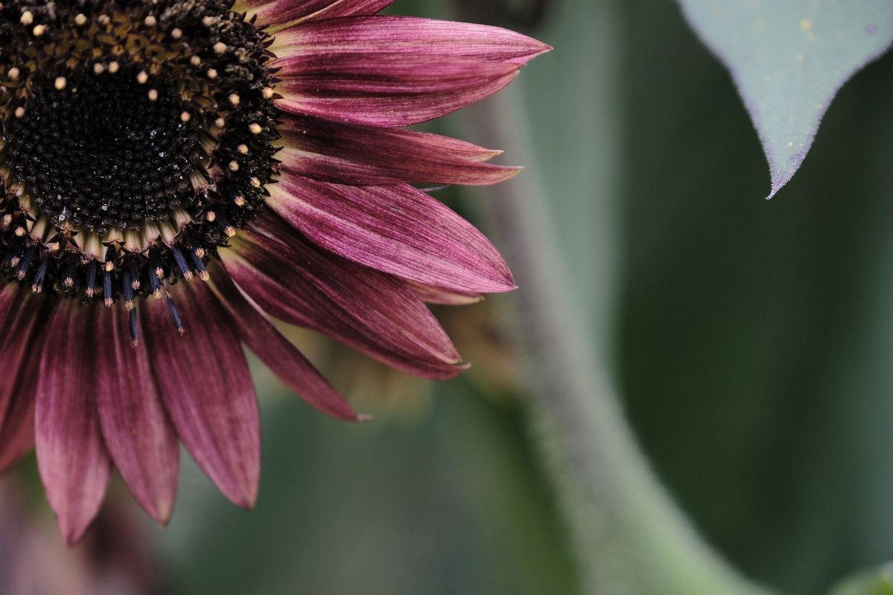 Single purple flower closeup