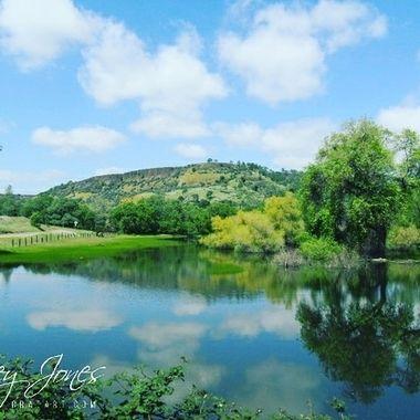 Pond in Spring