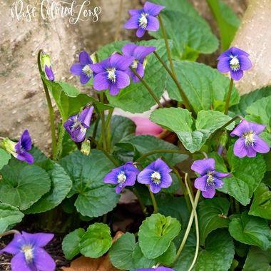 Natural Violet Bouquet