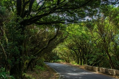 Lonely road through forest