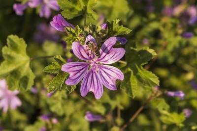 Bloom!!!!!!