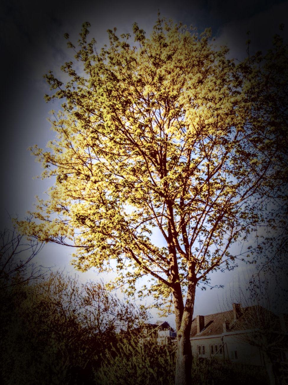 My spring walk 14/04/2020  My walk along in Tienen Belgium Sincerely Theo-Herbots-Photography https://groetenuittienen.blog/