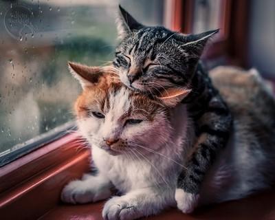 The best way to spend rainy days