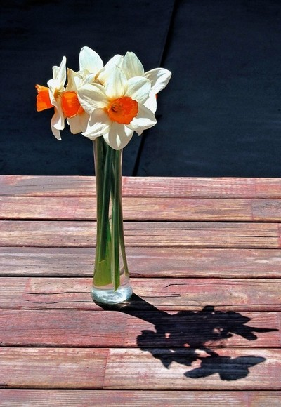 Daffodil Arrangement