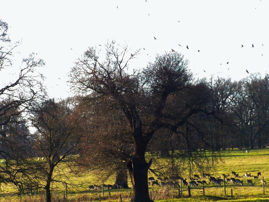 deers and crows