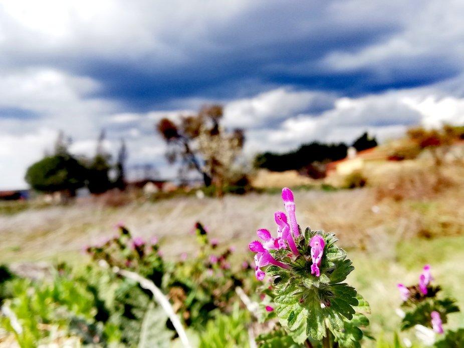 Primavera en el pueblo