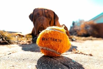 Play Ball ..