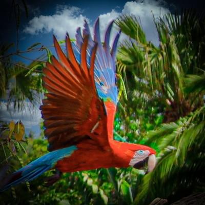 Parrot in Flight stylized
