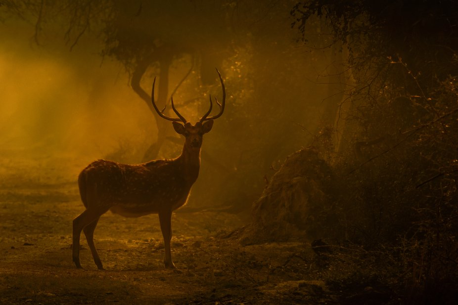 I clicked this picture when I found the deer staring at us from between the play of Lights and Sh...