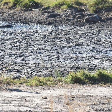 Marabou Stork in Sabie Riverbed near Lower Sabie
