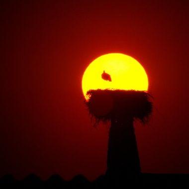 puesta de sol o contraluz con un nido de ciconia ciconia,en la chimenea de una casa de campo