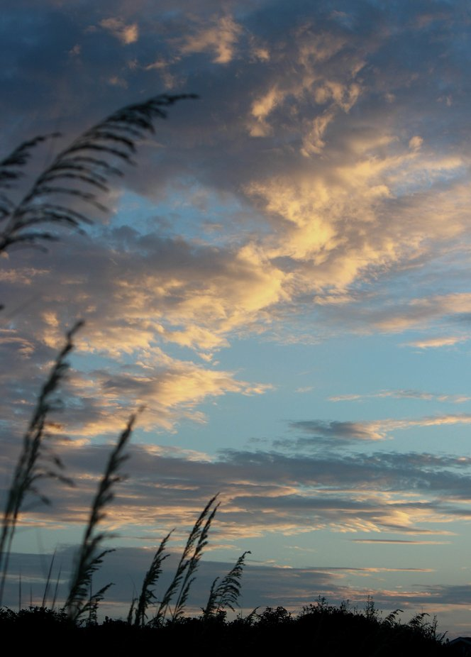 A  view from the beach dunes at dusk