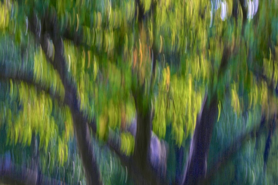 In the park...intentional blur