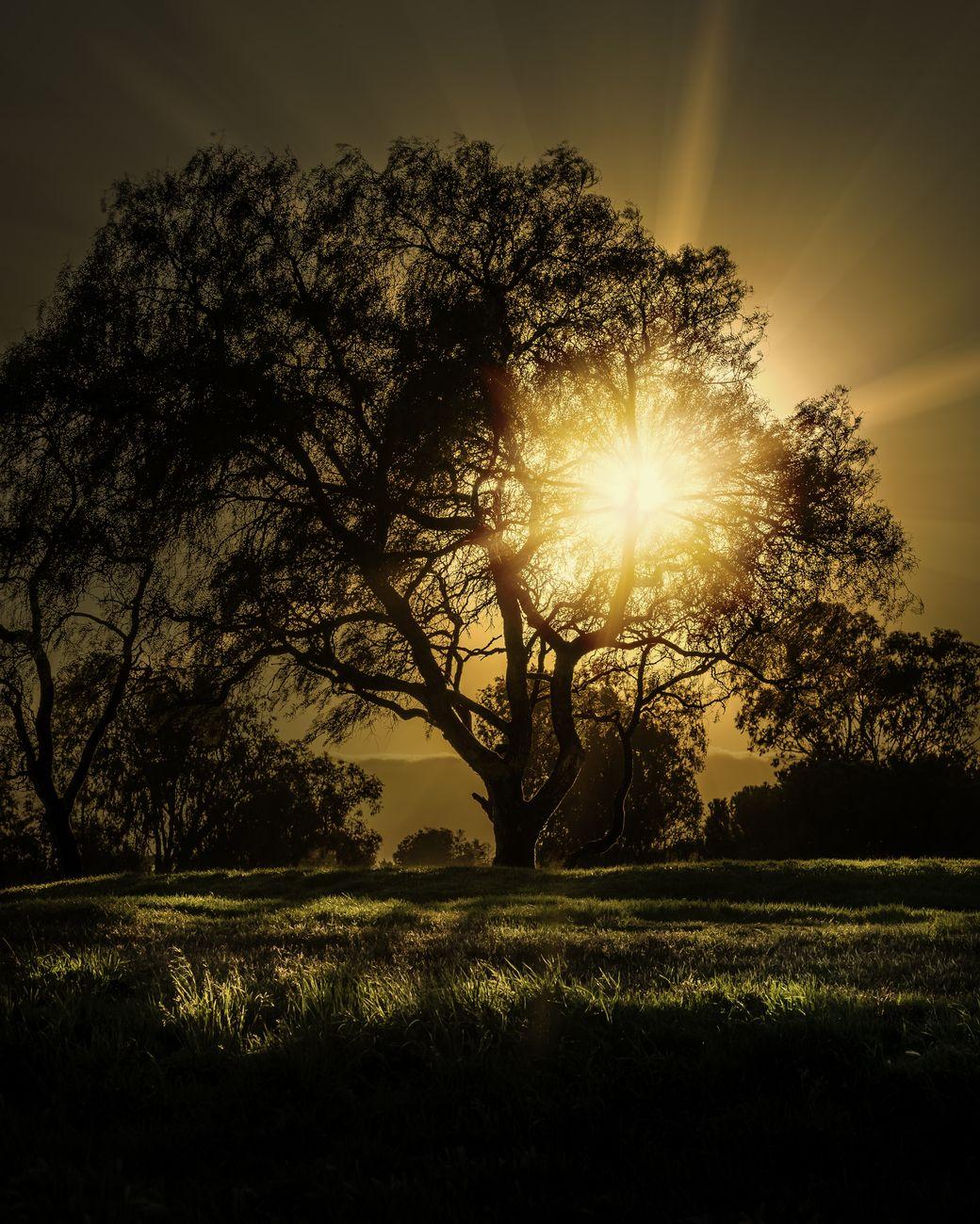 South Bay Sun