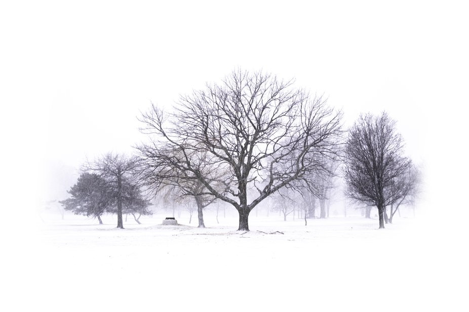 Remembering the Winter