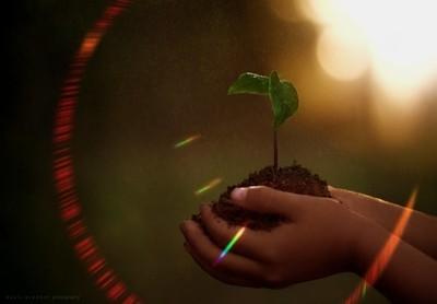 He who plants a tree plants a hope.~Lucy Larcom