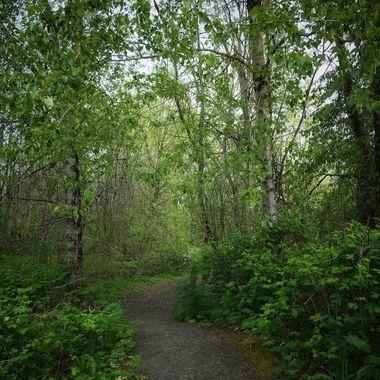 Salish Ponds Wetlands Trail in Fairview, Oregon.