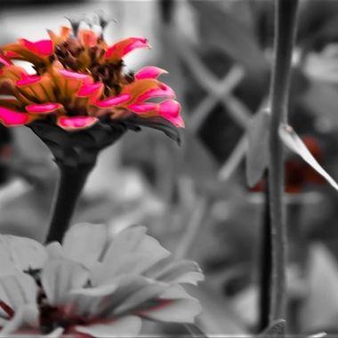 _M0A0820_edited_edited (2)