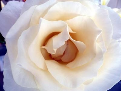 Rose Macro 20.04.23 a292 ed
