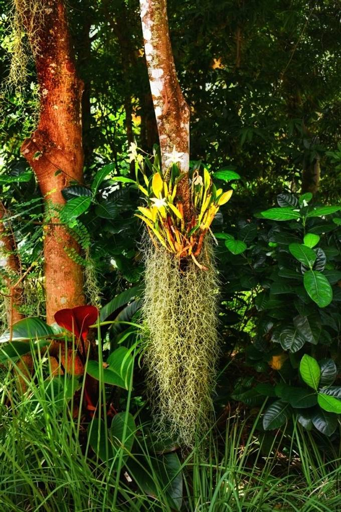 Spanish Moss, Vizcaya Museum,  Miami