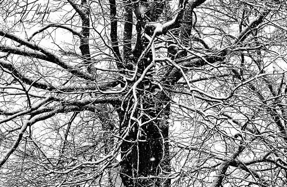 Spindly tree branches in disarray covered with a soft coating of snow brings a sense of calm amidst the chaos.