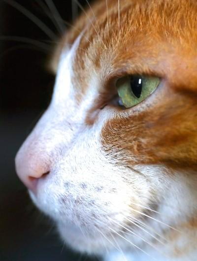 In ya face... Cat.