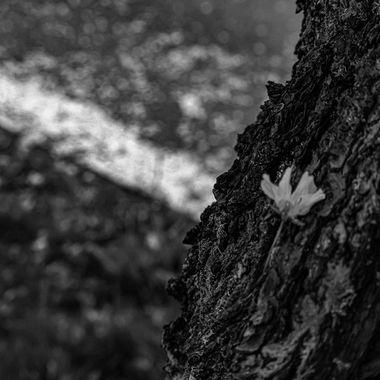 Tree flower BW