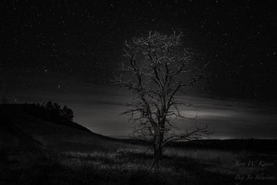 Dead Tree Under the Stars