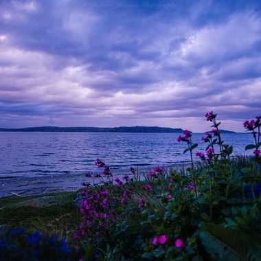 So simple and serene :) Natures beauty is amazing! Hood Canal, Washington, USA