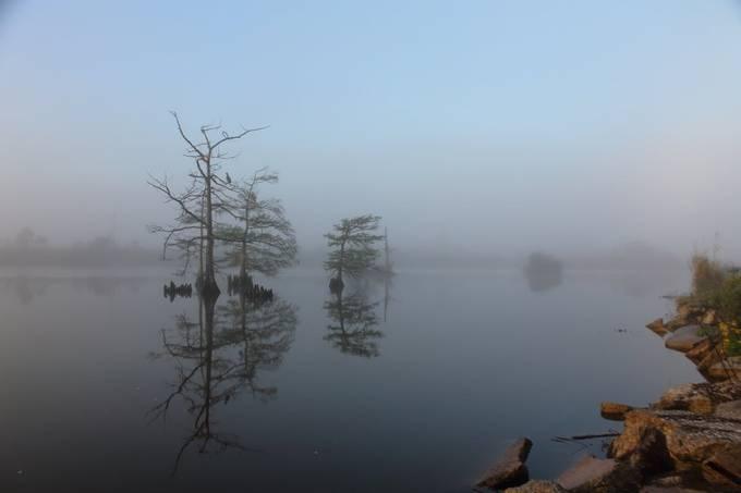 Foggy sunrise on a Louisiana, bayou