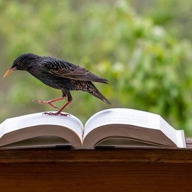 Book with a Bird