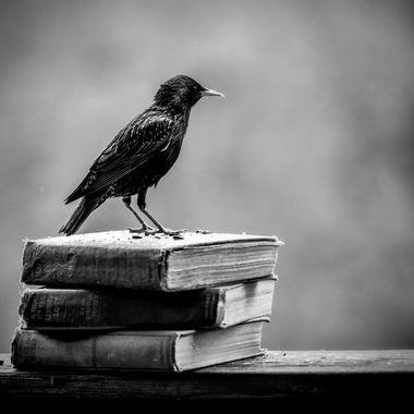 Old Books, Old Soul