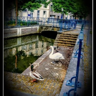 In Tienen a small river runs through the city