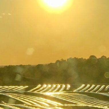 Sunlight over tomato fields.