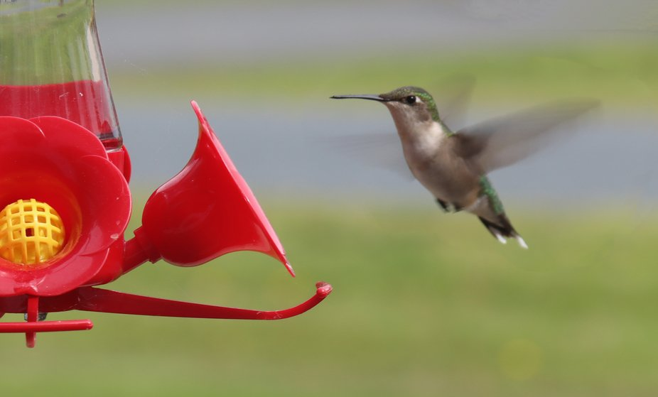 First hummingbird sighting this spring (2020).  Something beautiful to watch finally in this coro...