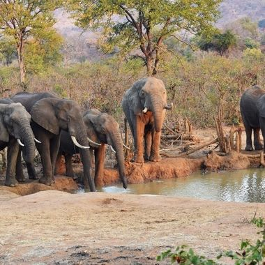Elephant herd at waterhole next to Punda Maria Rest Camp.