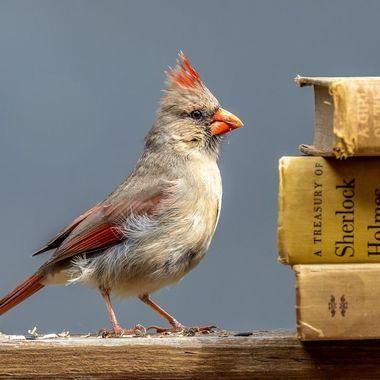 A well-read bird