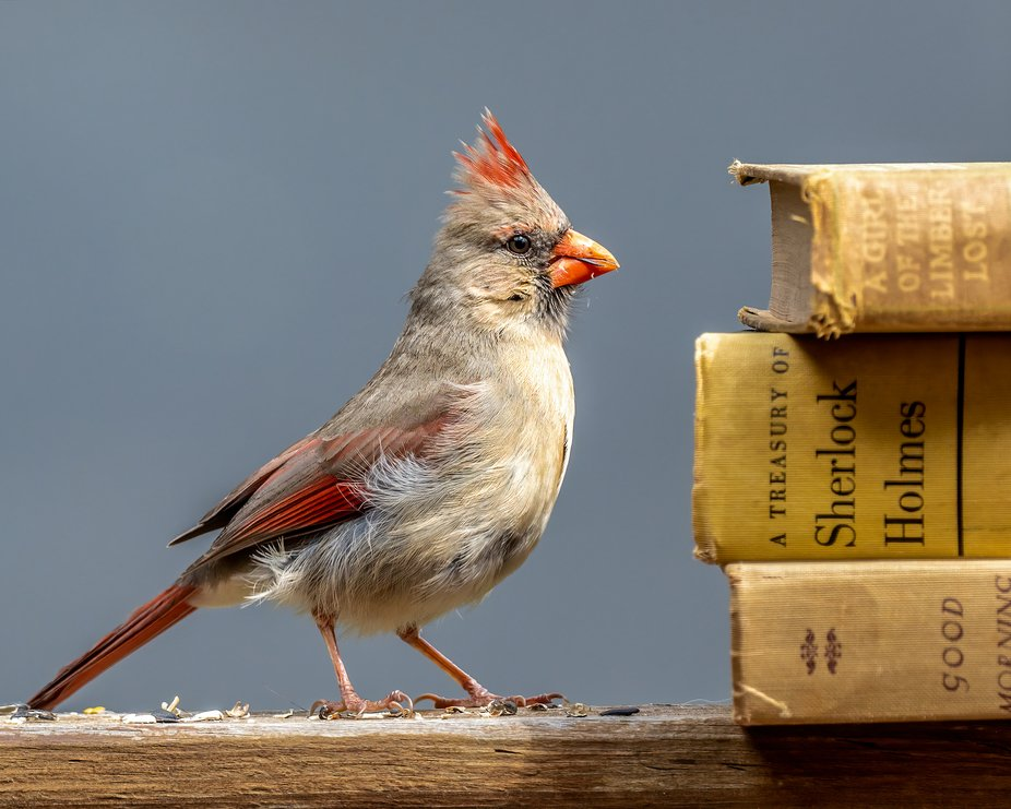 A well-read bird