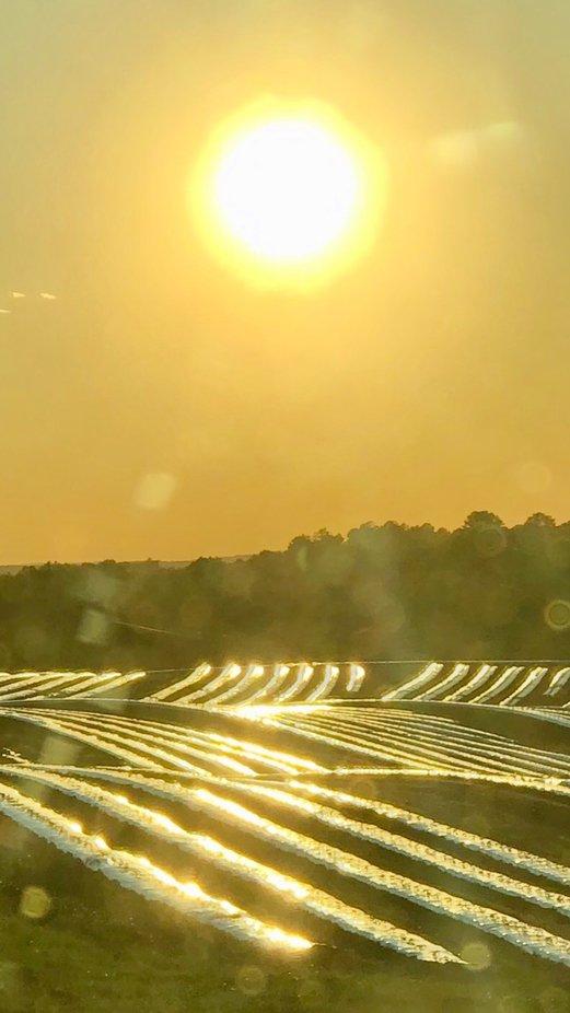 Sun over tomato field.