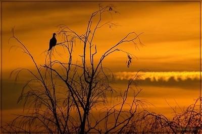 Silhouettes______#silouette #sunset #orangesunset #wintersunset #tree #nake